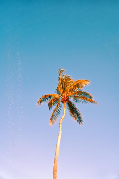 tree split tone palm nature