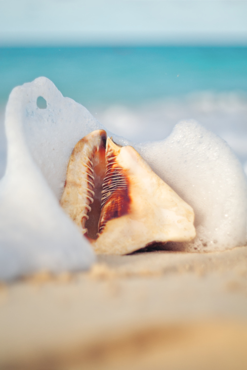 Seashell ocean water waves beach sandy foam nature