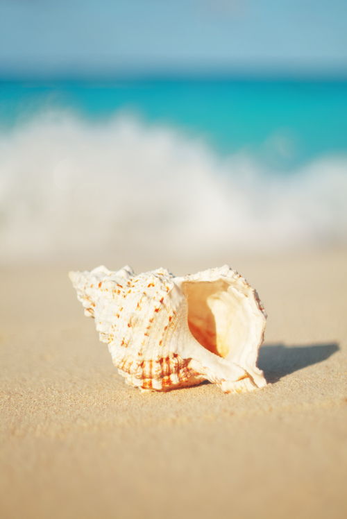 sand ocean waves nature shell seashell beach summer