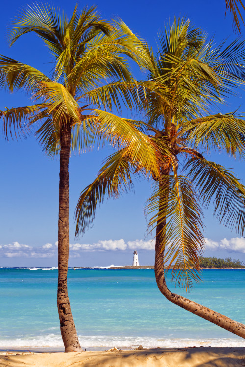Coconut tree ocean waves lighthouse nature landscape photography