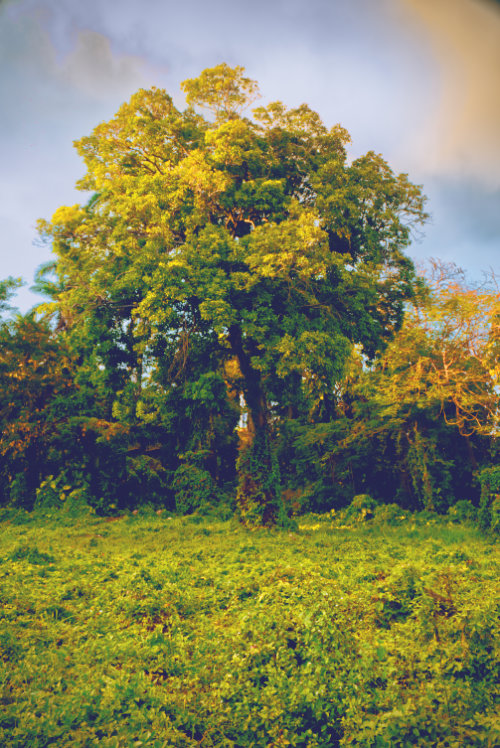 tree plant bush nature photography